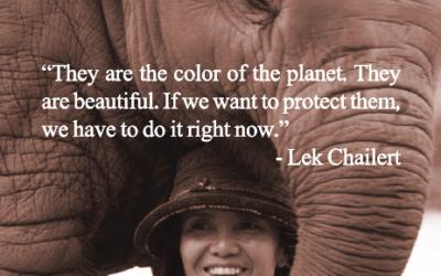 Elephant Nature Park – Graue Riesen mit großem Herz