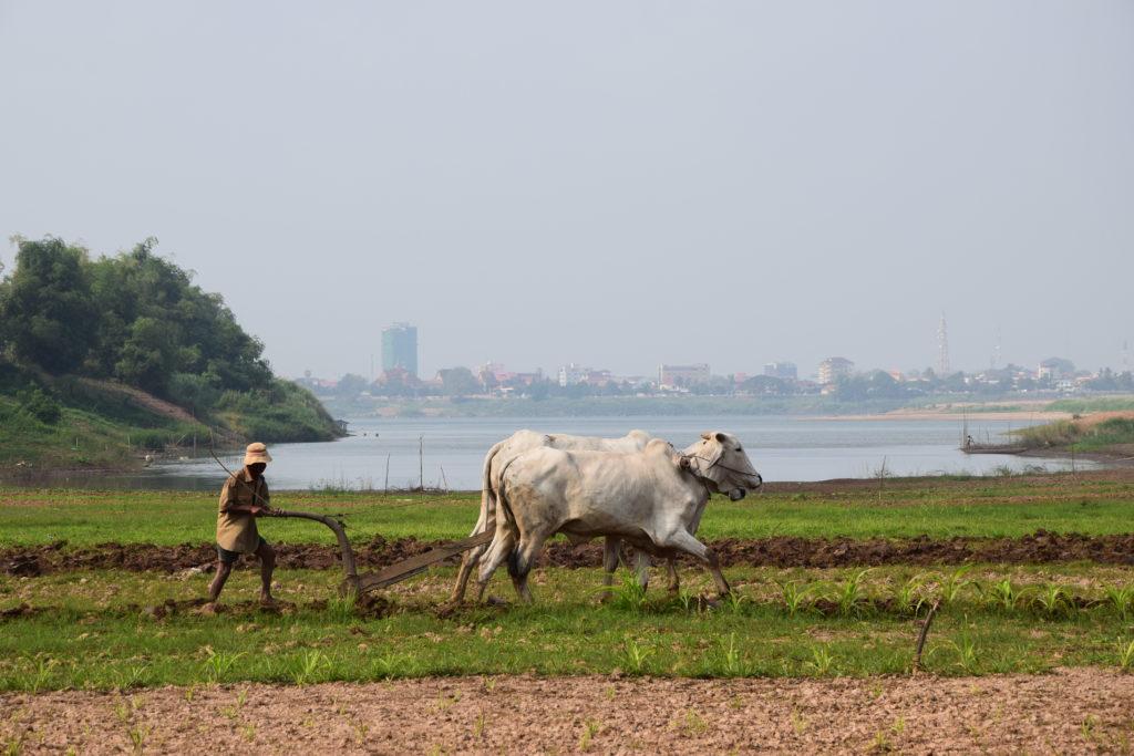 Landwirtschaft Kambodscha