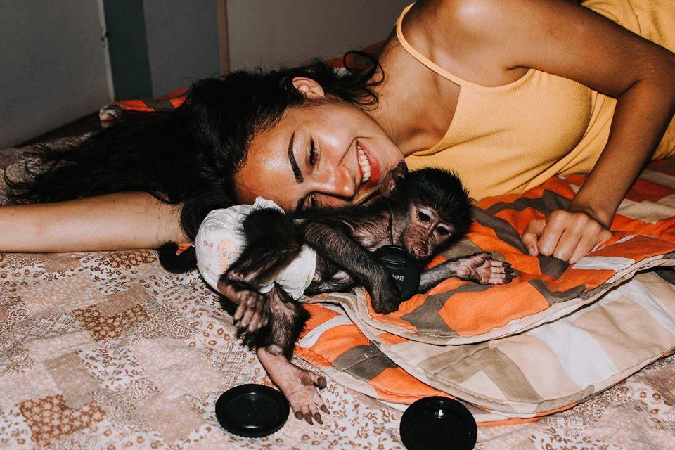Affen Tierschutz